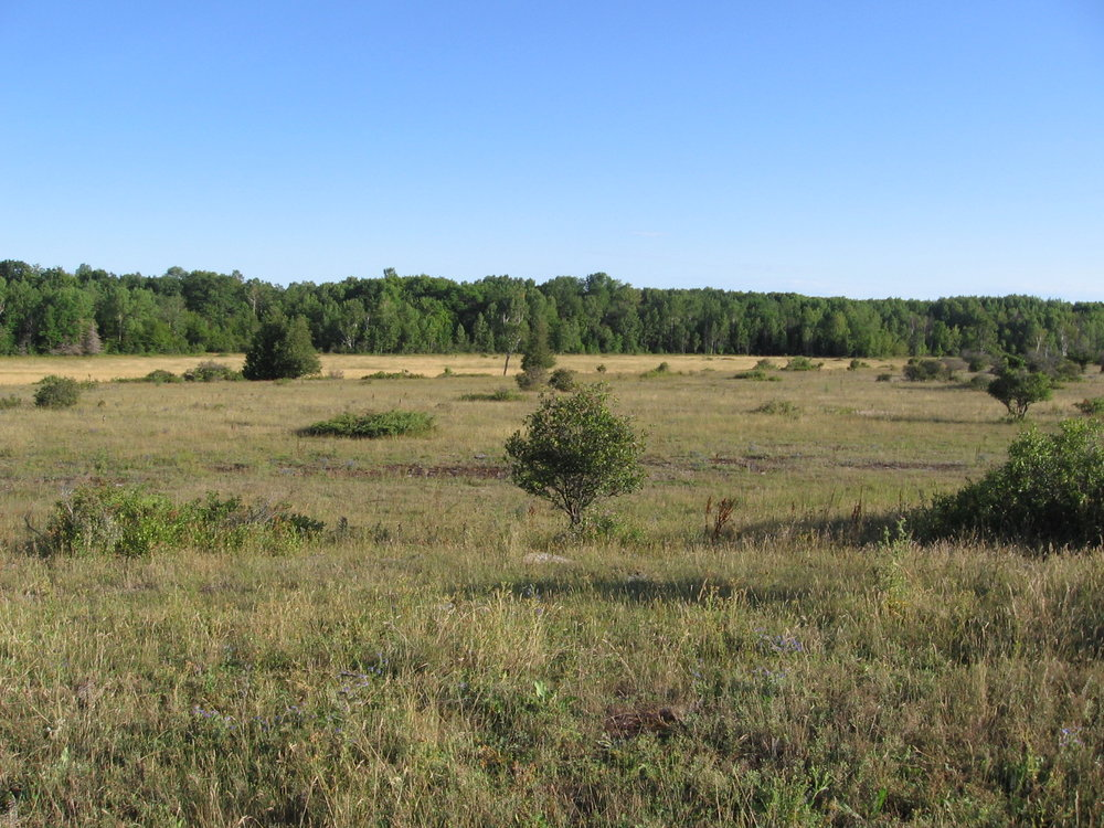Typical Loggerhead Shrike habitat at the northern edge of the breeding range in Ontario, Canada