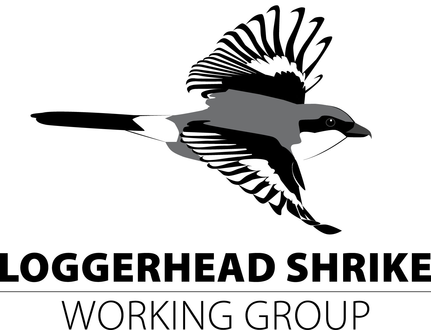 Loggerhead Shrike Working Group