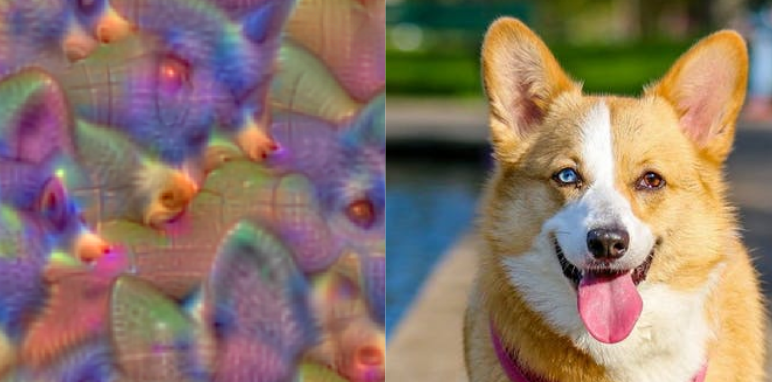 Compare what the network thinks of when you say corgi to the image of a real corgi