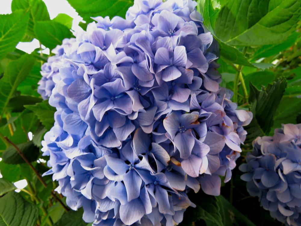 blue cluster_1.jpg