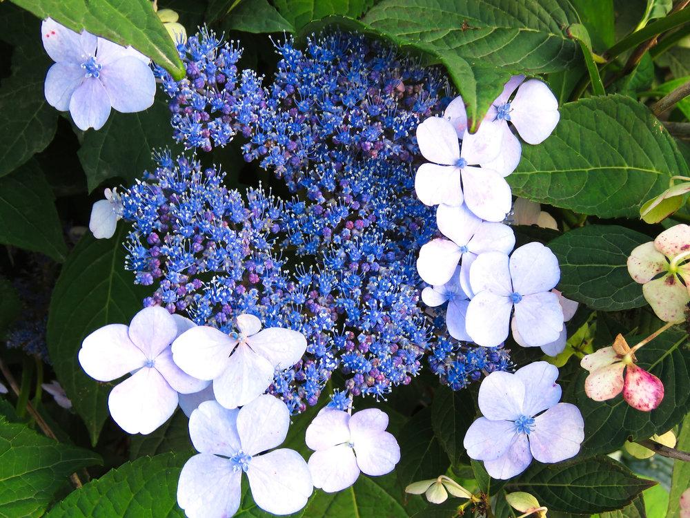 blue cluster.jpg