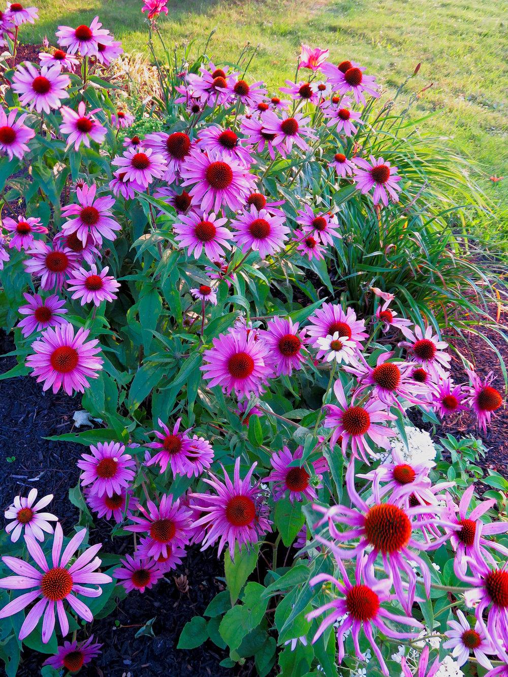 pink flowers_1.jpg