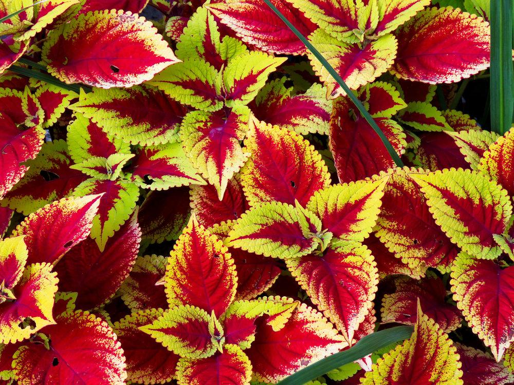 redgreenflower.jpg