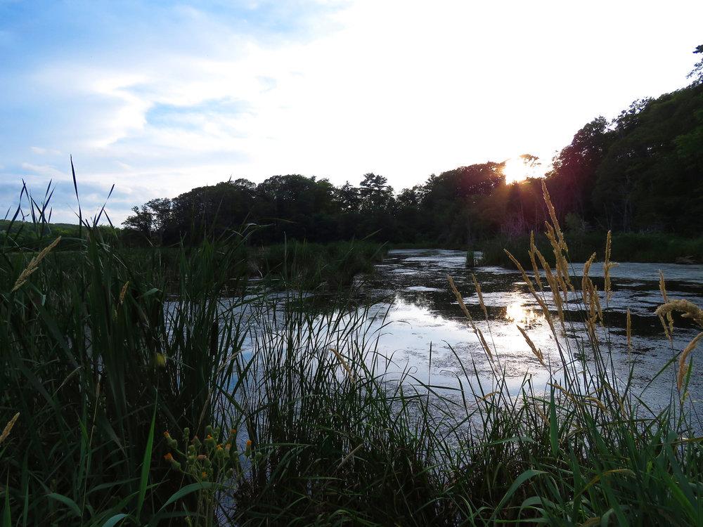 sunset marsh.jpg