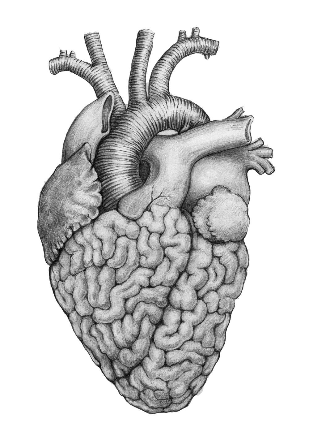 heart/brain - 11.2017