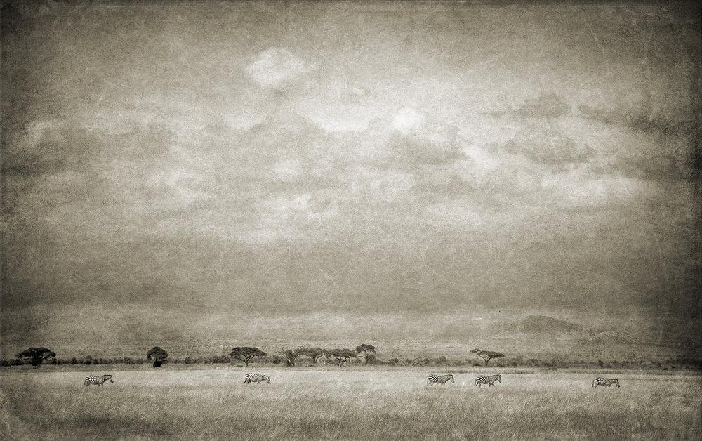 Zebra Landscape shrp -Organic copy.jpg