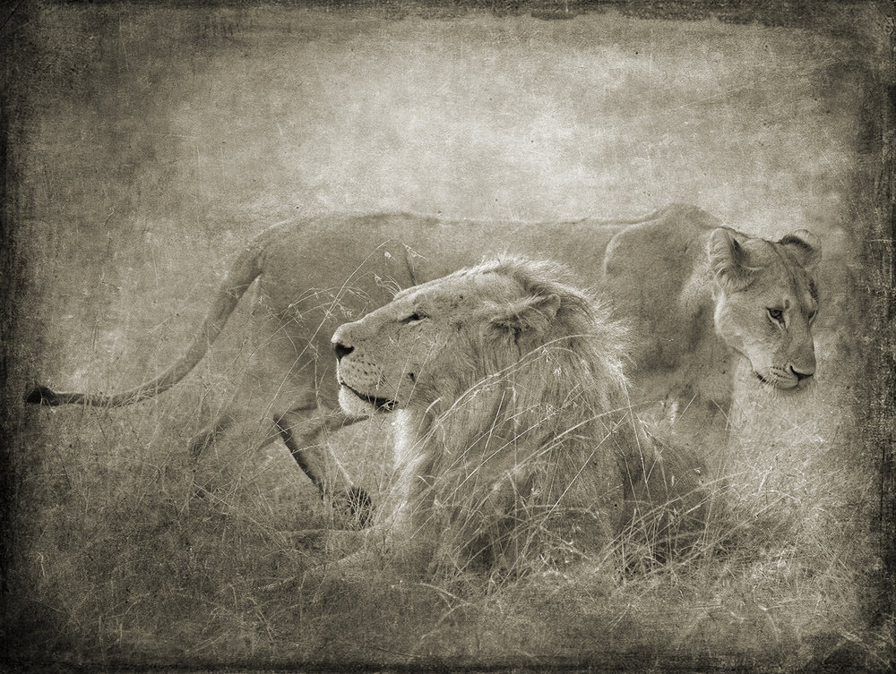 Lion and Lioness book.jpg