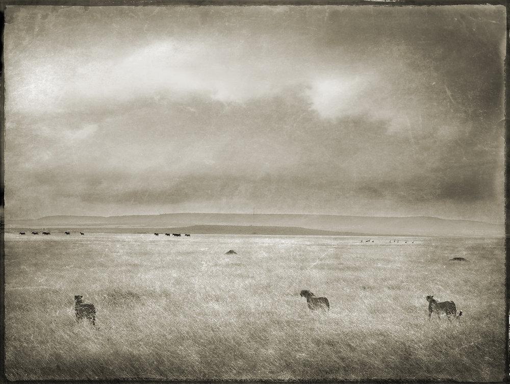 Three Cheetahs Hunting in Landscape copy.jpg