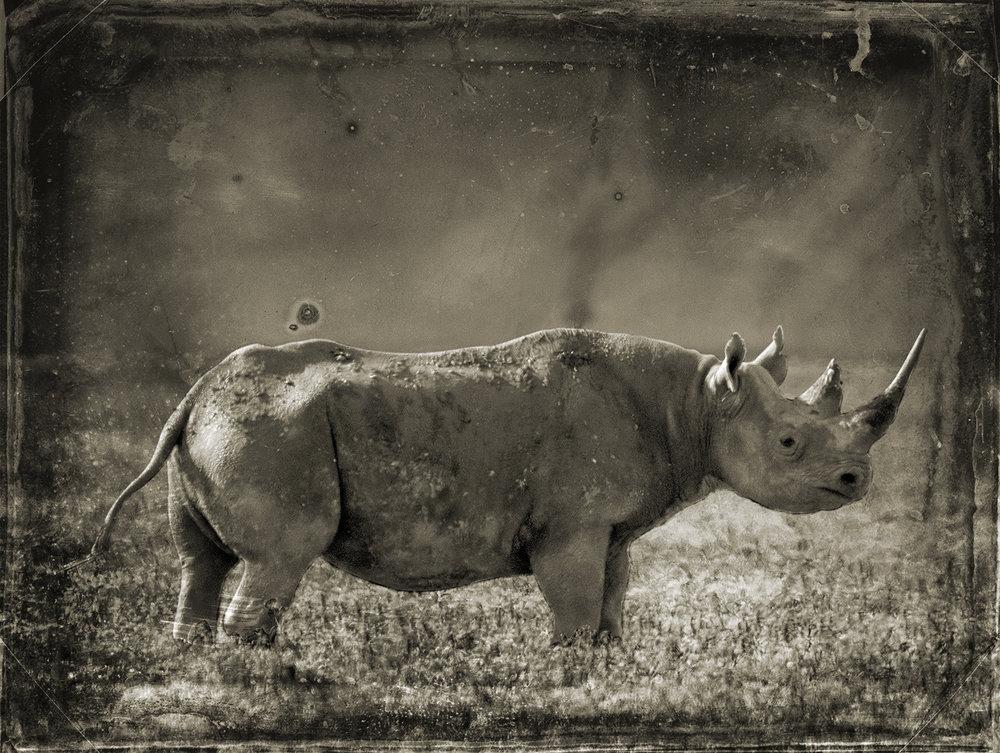 Rhinoceros copy.jpg