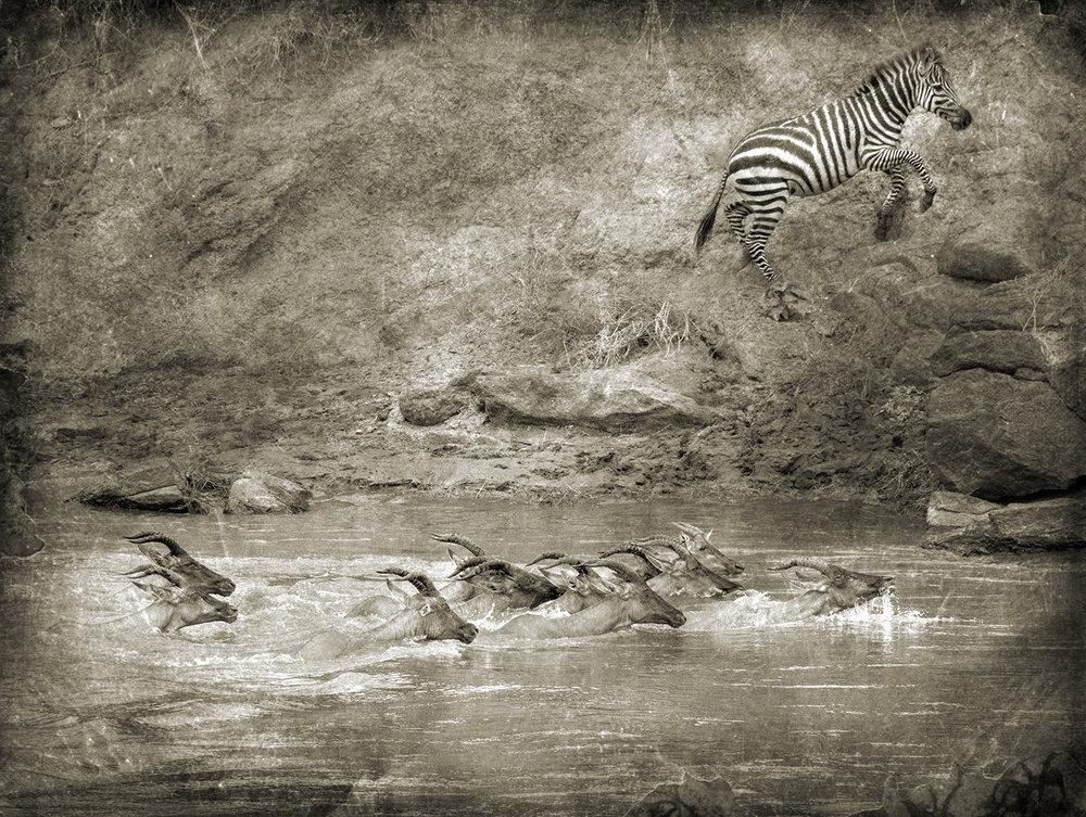 Topi in River and One Zebra v2 copy.jpg