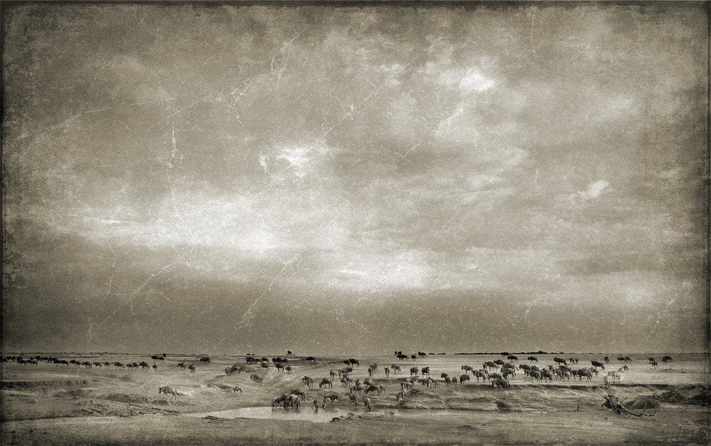 DXO Wildebeest Landscape 24x36 copy.jpg