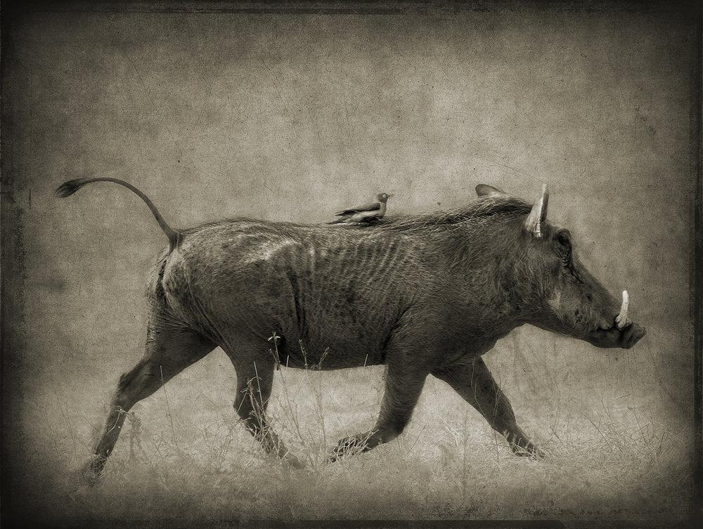 Warthog and Passenger copy.jpg