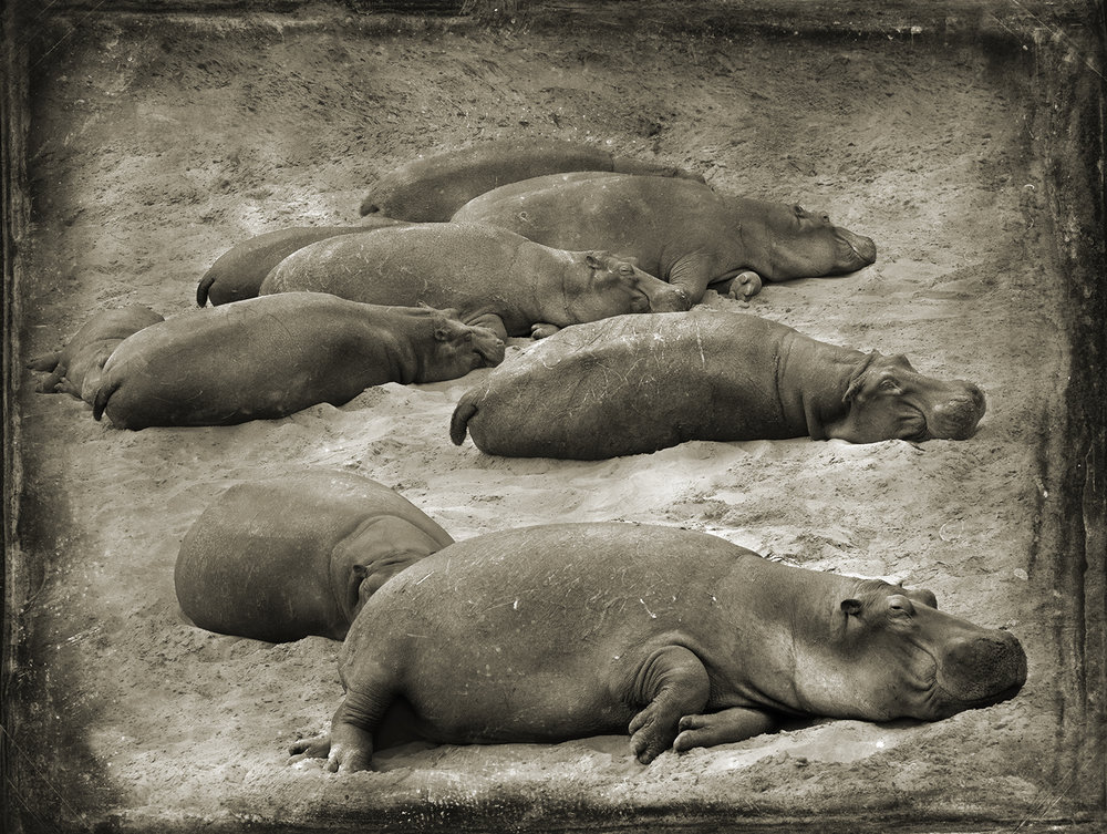PEC_Beached Hippos_1459 copy.jpg