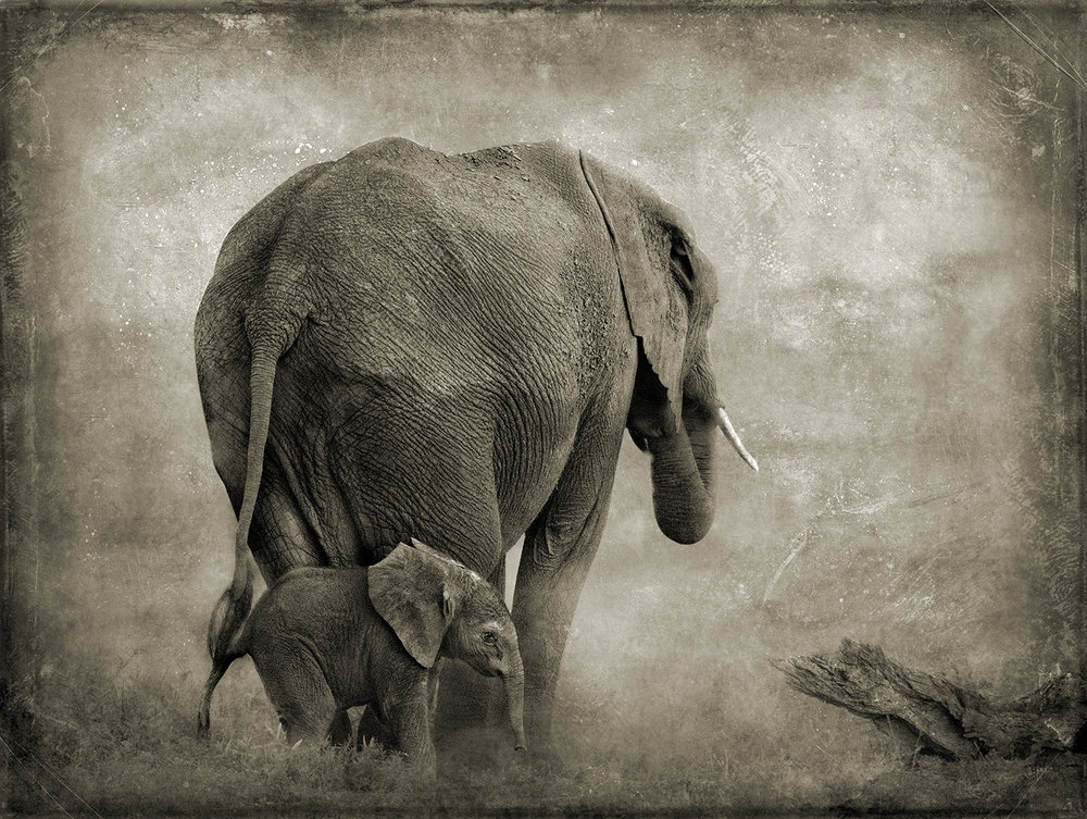 Elephant Mother and Child copy.jpg