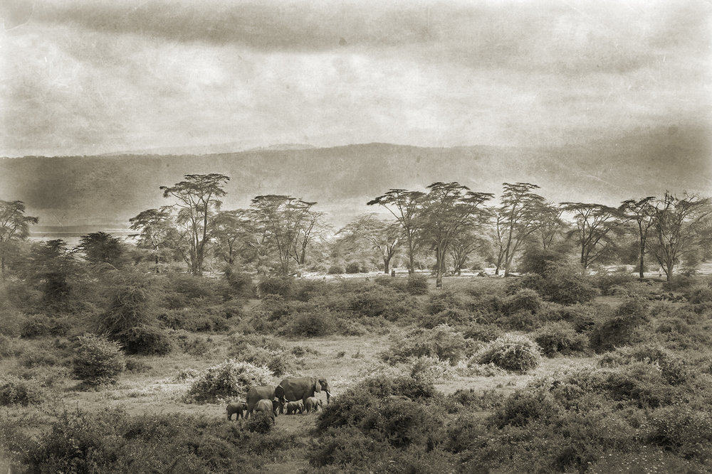 ELEPHANTS IN THE CRATER.jpg