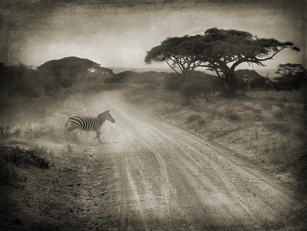 PEC_Zebra Crossing Road_2393 copy.jpg
