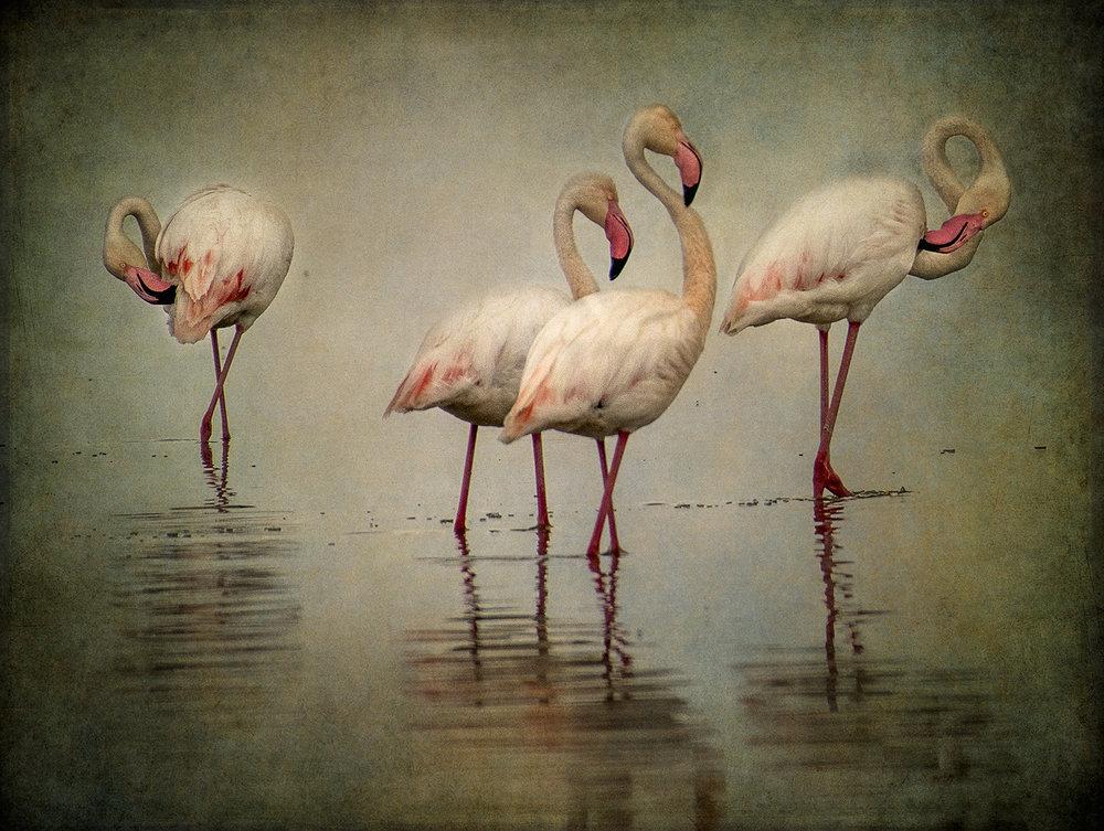 Four Flamingos copy.jpg