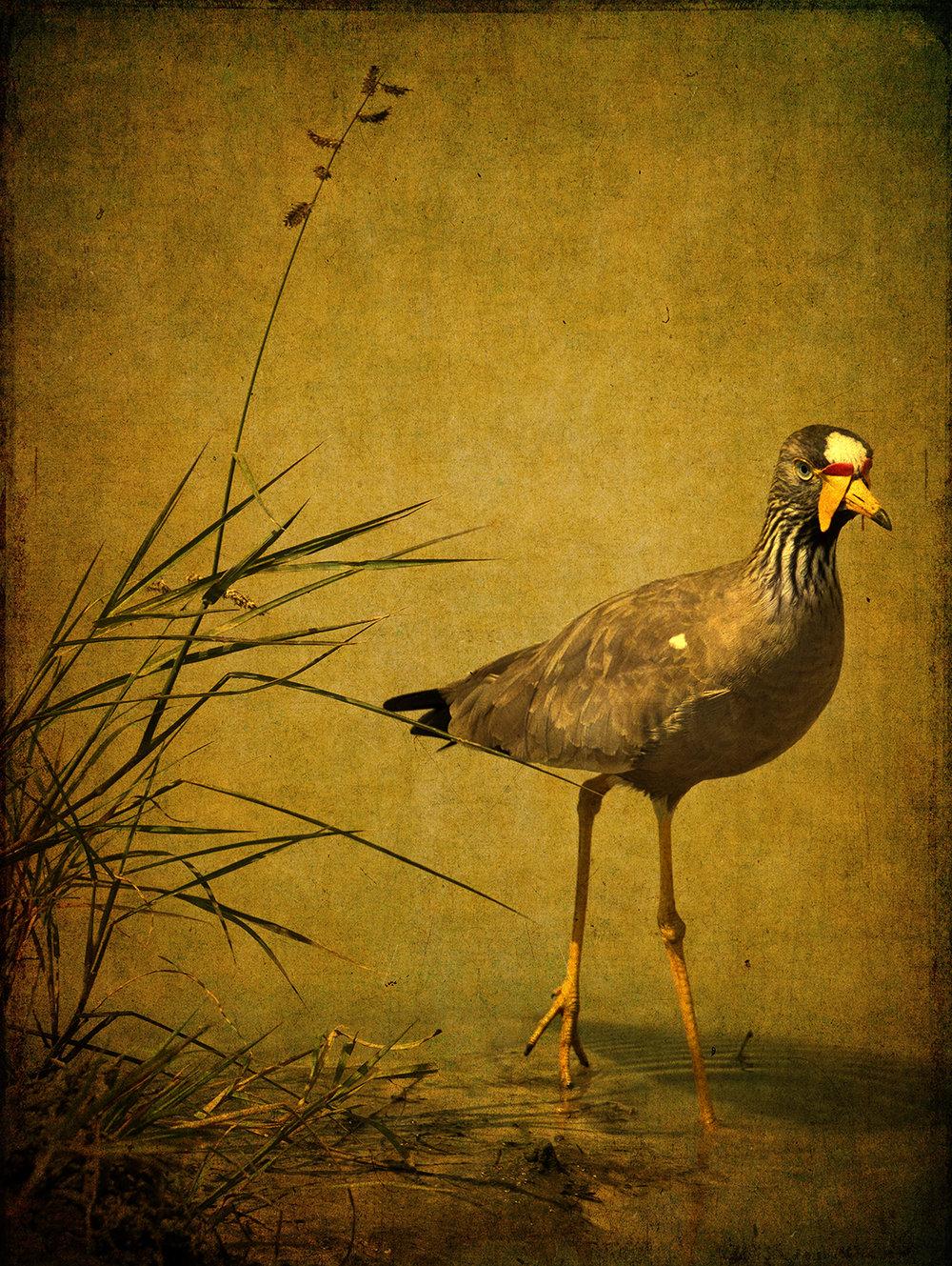 PEC_Bird In Reeds_1349 copy.jpg