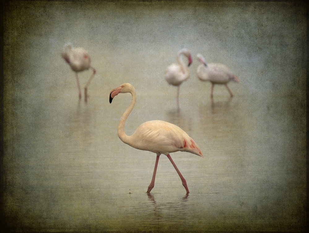 PEC_Flamingo_6569 copy.jpg