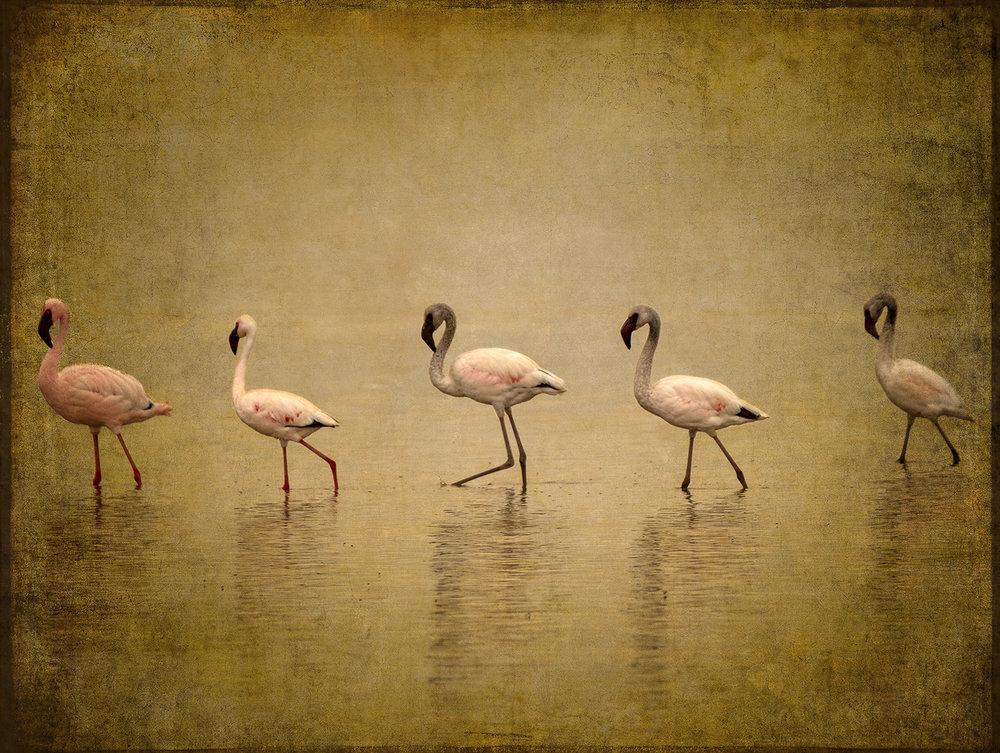 PEC_Five Flamingos_6723 copy.jpg