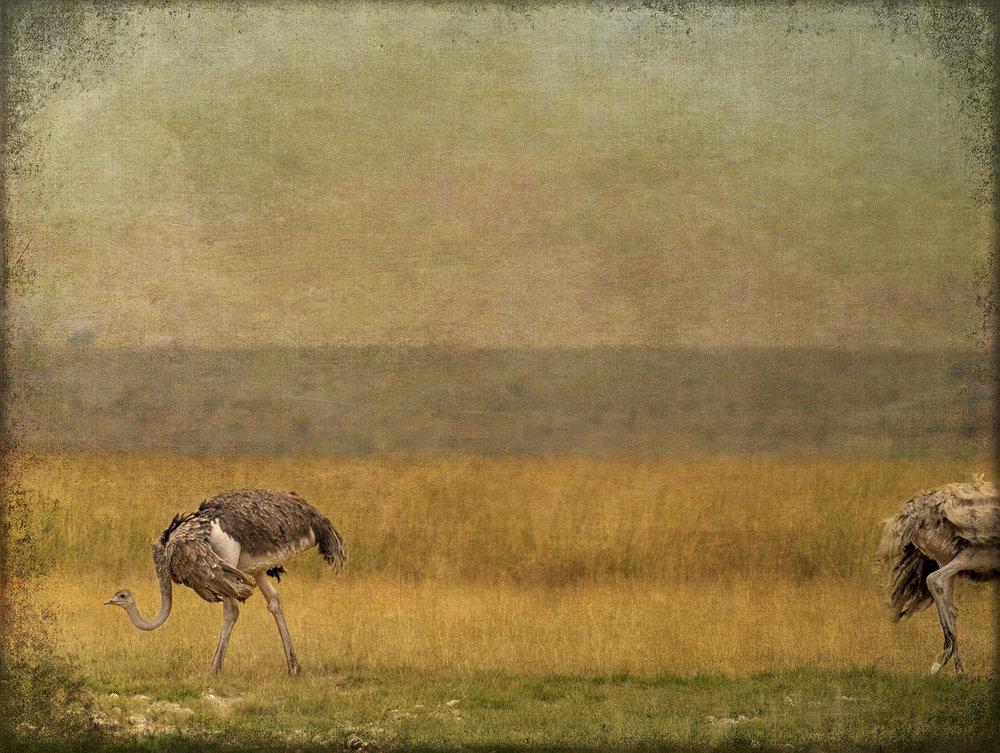 PEC_Two Ostrich_5154 copy.jpg