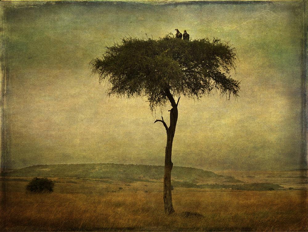 PEC_Vultures in a Tree_9920_40x60 2 copy copy.jpg