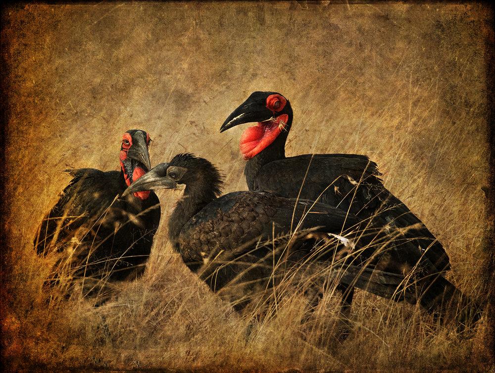 Three Birds copy.jpg