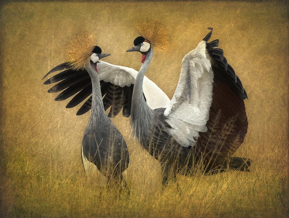 Dueling Cranes 1 copy.jpg