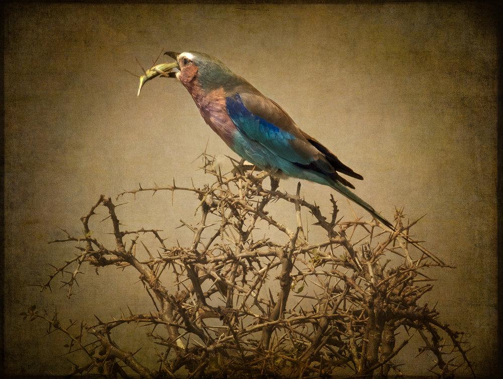 PEC_Bird Eating_1290 copy.jpg