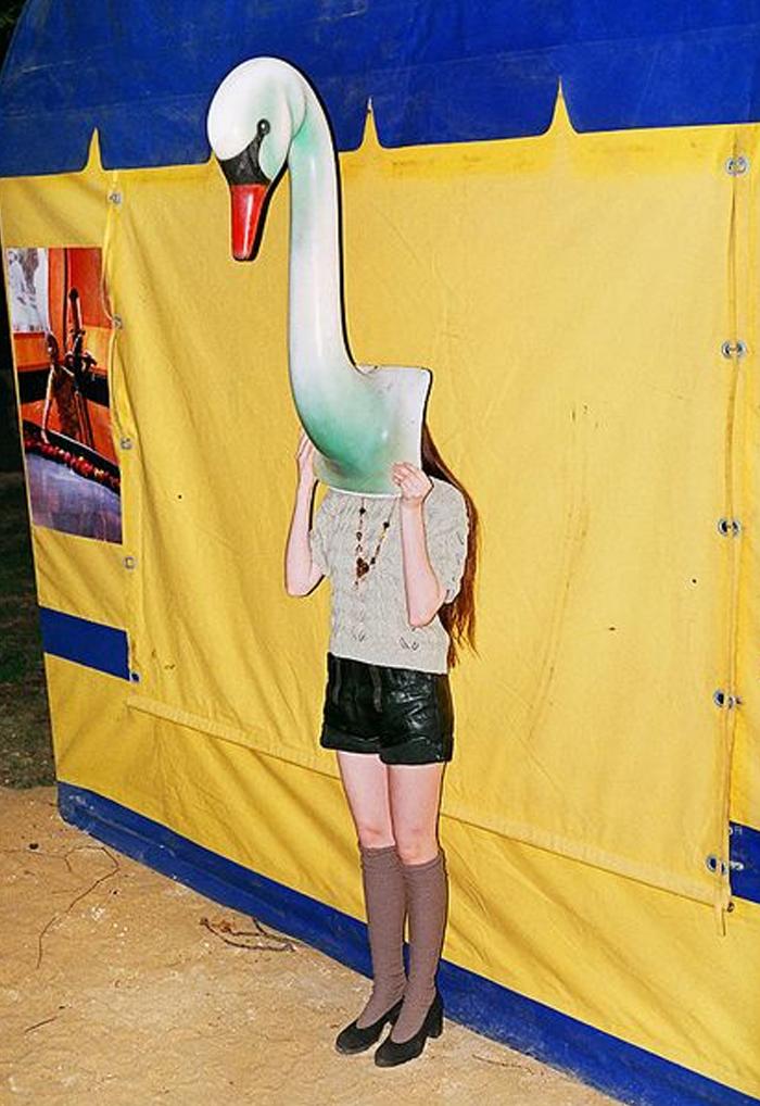 Vibes-Hiding-Swan