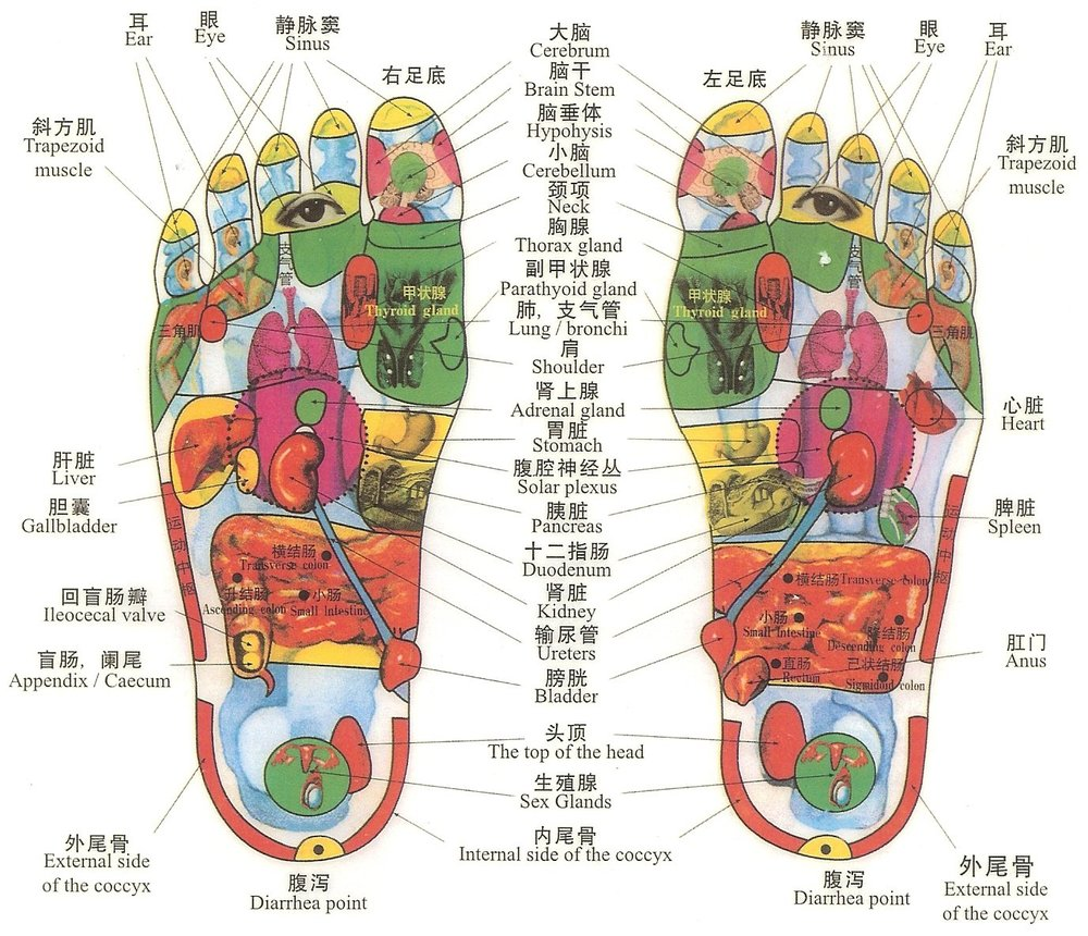 Reflexology - Feet / Hands / Ears all reflect the Entire System