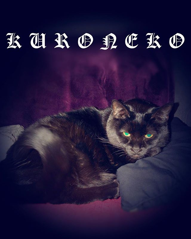 KURONEKO 2018✨  If you are awesome and like: • Cats • Electronic synth music • Dark • Cat Helmet • Something different - 👉 www.kuronekoband.com - - 2018年もDark LOVE 真っしぐら🖤 . . . #cat #blackcat #2018 #purple #eyes #electronicmusic #catlover #dark #darkside #darkness #fuckyou #kuroneko #synth #animals #poser #queen #sleep #ねこ #黒猫 #猫部 #癒し #今日のコーデ #おしゃれ #癒される #🐾 #自撮り #followme #me