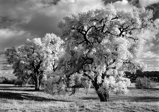 Cottonwood__5.jpg