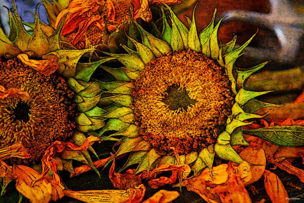 sunflowers-28-Edit.jpg