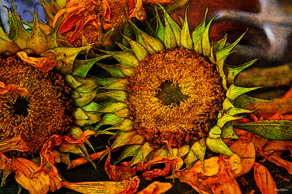 sunflowers-28-Edit.jpg