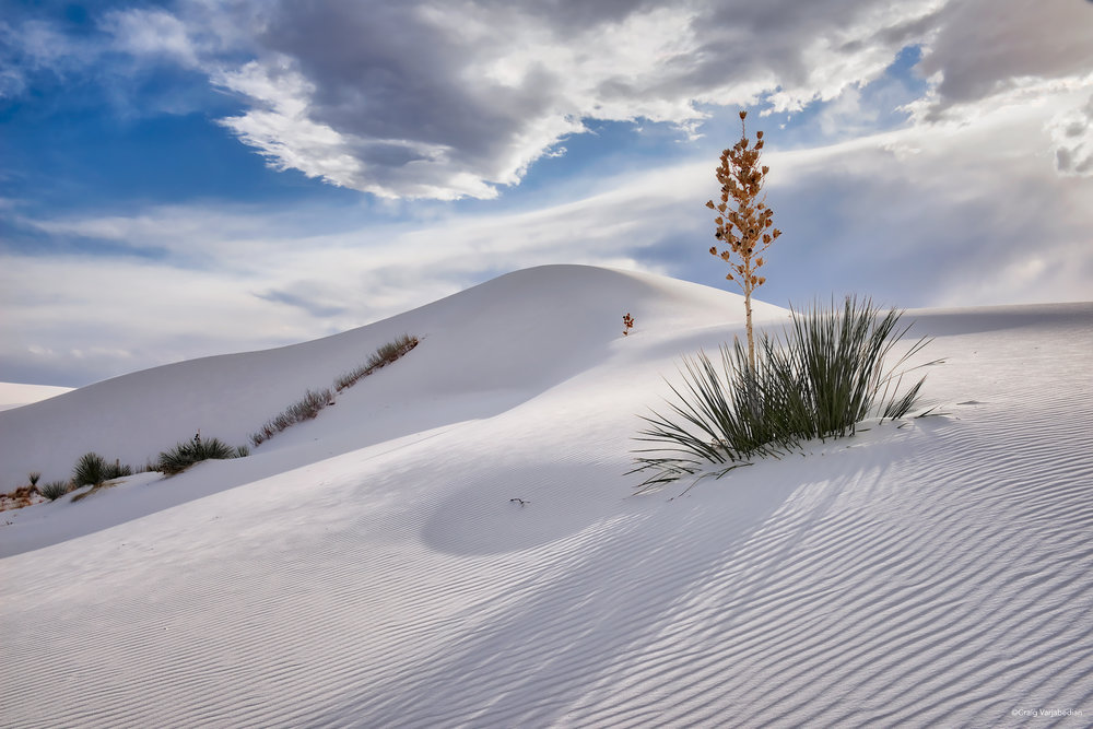 DSC_1930_Single Yucca and dunes copy.jpg