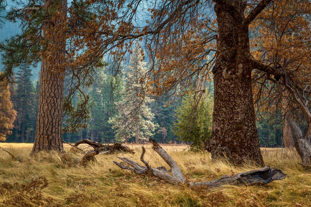 Glowing Tree_DSC9372-2500px.jpg