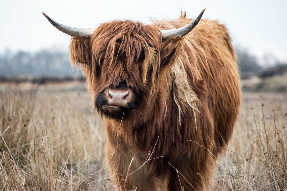I didn't take this. Shane Aldendorff from Unsplash did. But still. I wanna make this guy my bestie because those bangs are a MOOD.
