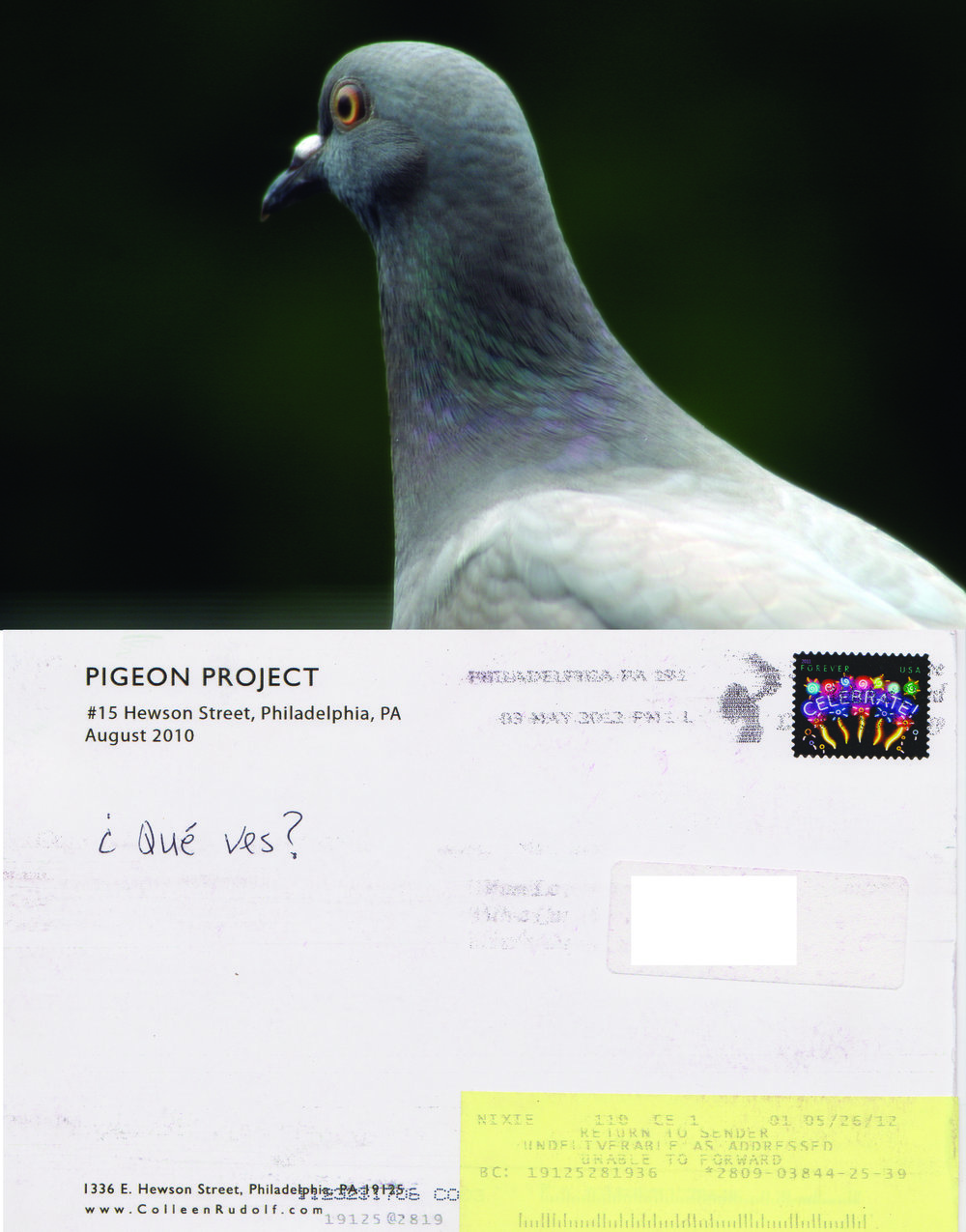 No 15 Pigeon eyes.jpg