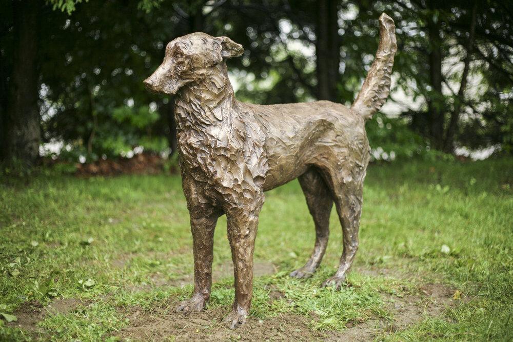 Encounter (dog)
