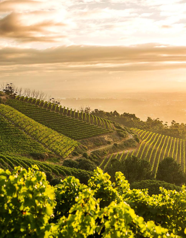 BEST-OF-HISTORIC-CONSTANTIA-WINE-VALLEY-.jpg