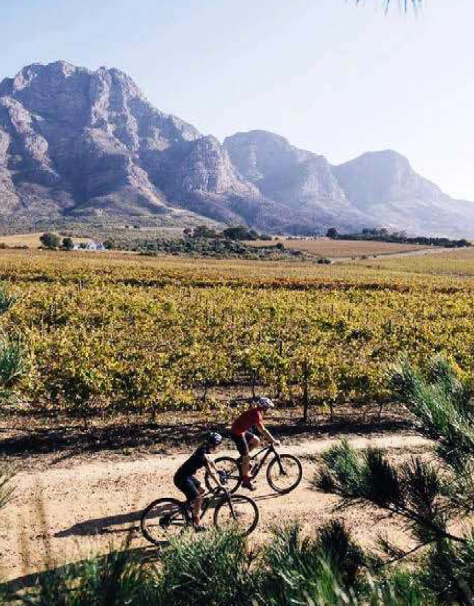 WINELANDS-SIP-&-CYCLE-SAFARI-.jpg