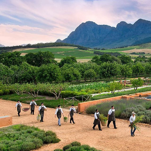 "ULTIMATE FOODIE TOUR IN FRANSCHHOEK - A Private Food & Wine Tour. ...� On the Ultimate Foodie Tour in Franschhoek you'll taste excellent food and superb wine from some of the best estates in South Africa's culinary capital, Franschhoek. Translated from Dutch as the ""French corner,"" French Huguenots settled in this breathtaking valley in 1688 and brought with them their French flair for cooking and lifestyle. This delightful region emanates the same food and wine driven approach to life, but with a uniquely South African twist. ... For reservations see our contact details in our bio. ... #tourism #wine #winetasting #food #capetown #southafrica #franschhoek #luxury #luxurylife #luxuryfood #instafood #tourism #tour #luxurylifestyle"