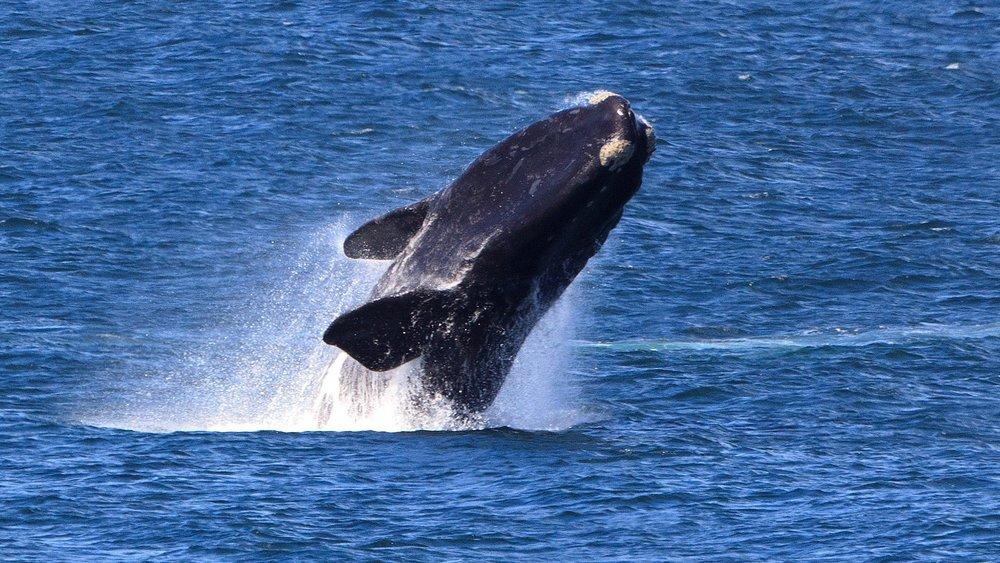 hermanus-whale-coast.jpg