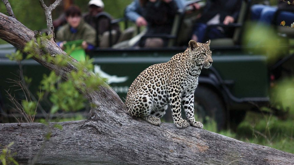 leopard-in-the-sabi-sand.jpg