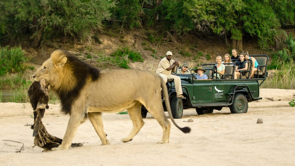 lion-game-drive-sabi-sand-kirkmans.jpg