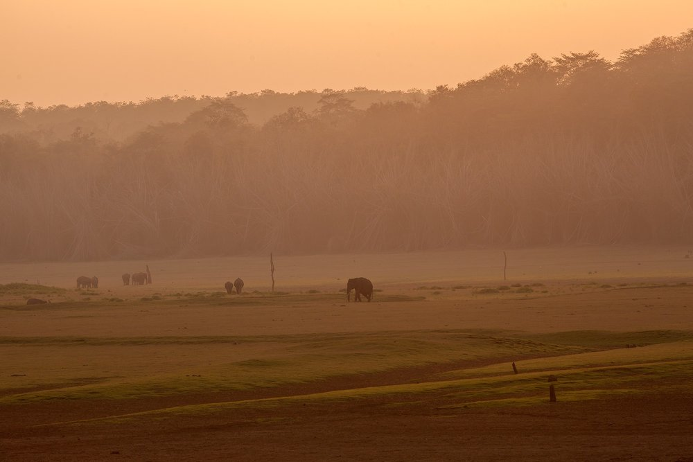 Elephants in the backwaters of Kabini