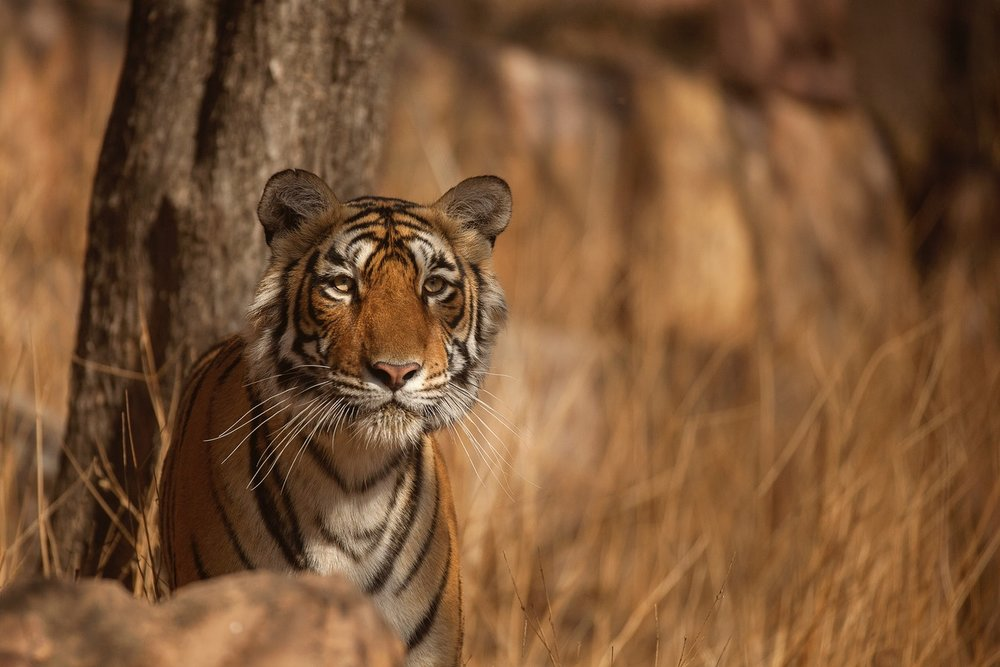 One-on-One interview with Rohit Varma on Wildlife Photography Festival