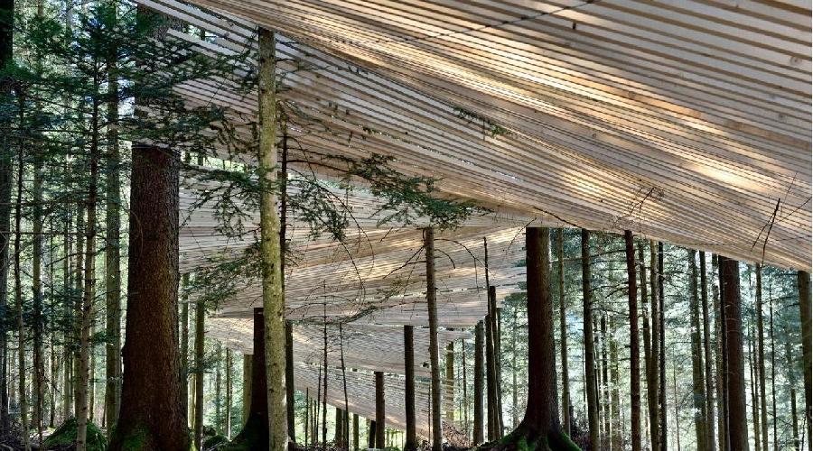 Un chemin magique dans les arbres, jouant les clairs-obscurs