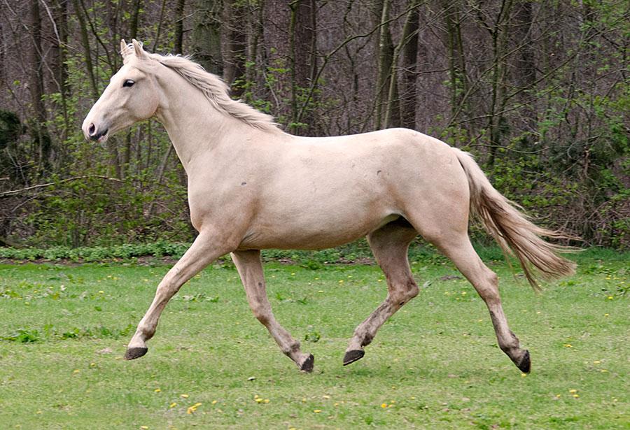 Een gezond en optimaal bewegend paard - Wil je inzicht in de belastbaarheid van je paard? En preventie van mogelijke blessures?Laat dan 1 à 2 keer per jaar je paard preventief behandelen. Voorkomen is echt beter dan genezen!